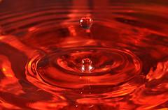 water drops (buffalo_jbs01) Tags: nikon waterdrop sb600 strobist su800 sb900 d3s