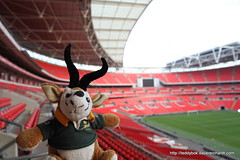 2011 nov 10 out and about img_1115 (Dave Reinhardt) Tags: london wembley teddybok