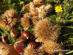 Castagne (OltreversoLab) Tags: ricci chestnuts castañas castagne caldarroste châtaignes