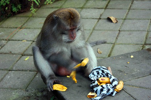 Ten Survival Tips for Visitors of Sacred Monkey Forest Ubud