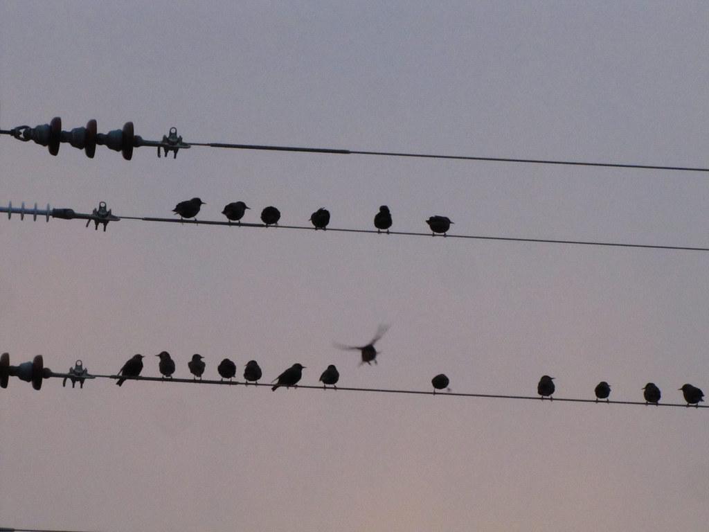 Mornin' Bird Chatter