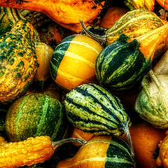 Harvest Bounty ('pixler') Tags: thanksgiving family november autumn food holiday toronto ontario canada fall gourds fruit photoshop turkey festive photography corn graphics flickr image market farm pumpkins harvest plymouth manipulation celebration acorn squash settlers crops flickrverse fowl spaghetti zucchini tradition sweetpotato marrows fx flickrdom merchants carts flickrfun bounty butternut flicker pilgrims natives digitalarts flickrites thebigsmoke newcomers 2011 flickrland artography photographicarts flickrween flickrmates flickrfriendship flickrship flickrhood flickrmas flickrtine artographx doubleniceshot pixler harvestbounty bighugz blinkagain bestofblinkwinners bbng flickrfunnies genuscucurbita