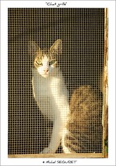 Chat grillé (Michel Seguret Thanks all for 9.900 000 views) Tags: france animal animals cat nikon chat gato pro katze d200 gatto animale tier smörgåsbord hérault frontignan dragongoldaward michelseguret