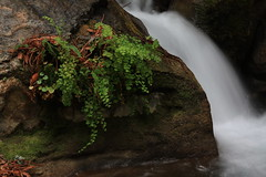 IMG_1557 (morgan_p_) Tags: california nature stream unitedstates bigsur northamerica cascade limekiln limekilnstatepark
