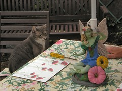 Angelica waiting for dinner (Mystic Ed & Fluffy) Tags: summer dinner cat bench hair chair feline waiting seat july fairy parasol hungry tablecloth angelica faerie gardenfurniture gardentable