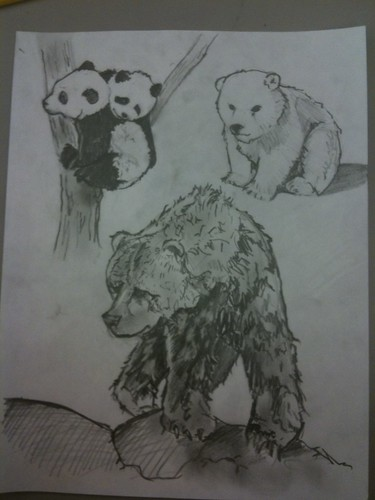 Bear sketches by Little's Creatures