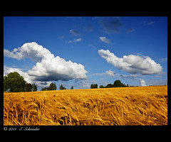 Chase of Clouds [explored] (Sebastian.Schneider) Tags: road summer sky cloud sun sunlight plant nature field weather clouds rural germany way season landscape outdoors deutschland countryside scenery day hessen cloudy outdoor farm horizon country farming natur scenic himmel wolke wolken sunny scene farmland line explore growth pasture land getty environment agriculture landschaft plain cloudscape agricultural gettyimages wow1 wow2 wow3 wow4 mittelgebirge driedorf wow5 ldk explored entdecken drausen lahndillkreis lahndill mygearandme dblringexcellence tplringexcellence artistoftheyearlevel3 artistoftheyearlevel4 musictomyeyeslevel1 eltringexcellence