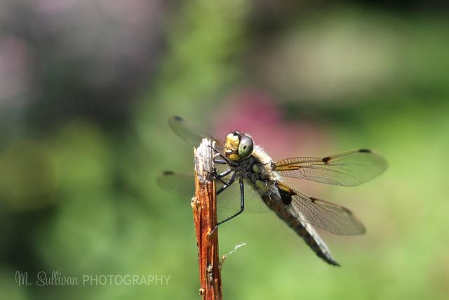 27/52 | nature's finest {msullivan photography}