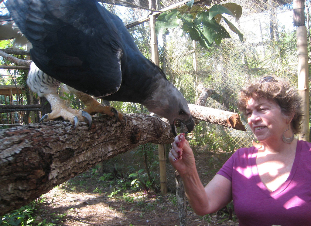 Mary Dell feeding an American Harpy Eagle