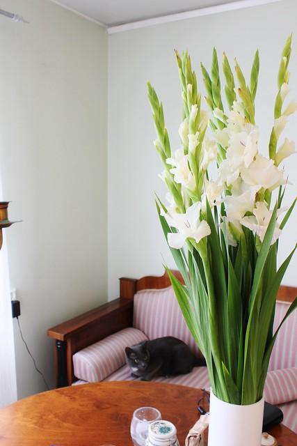 Jens blommor och spinken