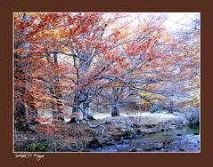 cuando el otoo muere (yolanda h. mangas) Tags: naturaleza arboles otoo rios mygearandme musictomyeyeslevel1 bosqueotooarbolesnaturaleza