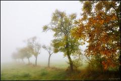 Brouillard d'automne (Excalibur67) Tags: autumn trees nature fog automne landscape nikon frost herbst explore arbres alsace paysage soe brouillard 10010 d90 vosgesdunord flickrclassique