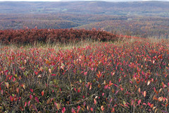A sea of red (talk2winik) Tags: mountains fall colors landscape westvirginia canaanvalley natureplus platinumheartaward
