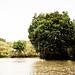 Mangroves-2