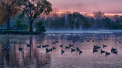 Morning at Schoonover Park (Eckybay) Tags: park morning autumn trees ohio mist lake tree fall nature water sunrise landscape geese other pond lima calm hdr schoonoverpark