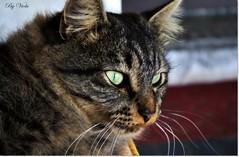 I see you ! (Simply Viola) Tags: cats halloween animals kittens felini gatti animali gattini