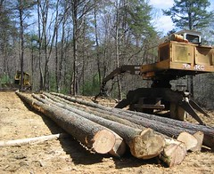 The first load of white pine logs at the loading deck, where the old trailer used to sit.