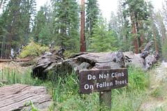 Fallen Monarch (daveynin) Tags: california wood signs tree sign giant nationalpark yosemite sequoia mariposagrove sequoiadendron deaftalent deafoutsidetalent deafoutdoortalent
