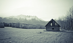 Abandonment (Ezra_Brousseau) Tags: wood old trees house canada fall abandoned field grass vintage log bc antique wheat oldhouse driftwood logcabin abandonedhouse smithers shack abandonment archaic shakes lr3 lightroom3
