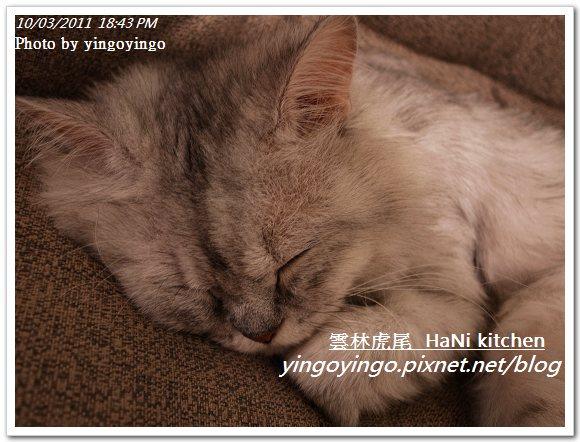 雲林虎尾_HaNi kitchen20111003_R0042567