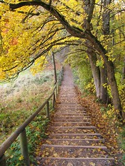 downstairs (koaxial) Tags: autumn trees fall nature colors stairs canon landscape herbst natur powershot treppe topshots sx130 natureplus 0271 photosandcalendar natureandpeople worldwidelandscapes canonautumn koaxial natureselegantshots panoramafotogrfico panoramafotografico greatshotss contacgroup doubleniceshot theoriginalgoldseal mygearandme mygearandmepremium mygearandmebronze flickrsportal blinkagain canonpowershotsx130is flickrstruereflection1 flickrstruereflection2 flickrstruereflection3 flickrstruereflection4 img9749a