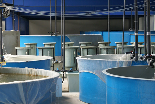 Government fish hatchery in Belum, Malaysia. Photo by Fred Weirowsky, 2008