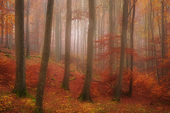 The forest of dreams II (flowerpics09) Tags: november autumn colors buchenwald herbst dream rgen beech herbstwald farben mecklenburg buchen herbstfarben herbstzauber farbrausch autumnmagic d700