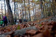 DSC_9278_low (Oscar Mendez - photographer) Tags: naturaleza paisaje otoo ordesa pireneo aragn pirineoaragons parquenatural parquenaturaldeordesa paisajesdeotoo