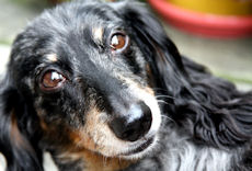 Beloved Maggie - December 23, 2000 - September 13, 2011