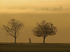 Lonesome runner (RainerSchuetz) Tags: autumn trees mist fall fog haze running jogging bestcapturesaoi elitegalleryaoi blinkagain artistoftheyearlevel2