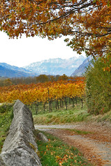 Take a walk on the wine side (Lorana Gallery) Tags: autumn beauty heidi switzerland wine roadtrip lorenzo roadpictures stasia graubunden lorana redyellowvineyards loranab