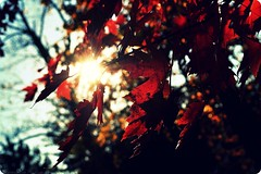 Autumn Sun. (Hammonton Photography) Tags: autumn sky sun sunlight fall nature colors leaves maple nikon colorful skies seasons quote buddha sunny rays d5000 jessicadigiacomo hammontonphotography