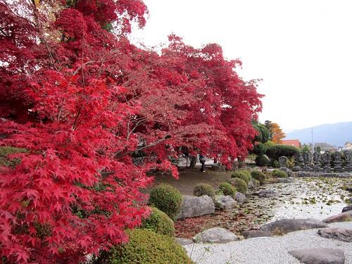 長円寺の楓の紅葉と睡蓮池 2011年11月8日15:47 by Poran111