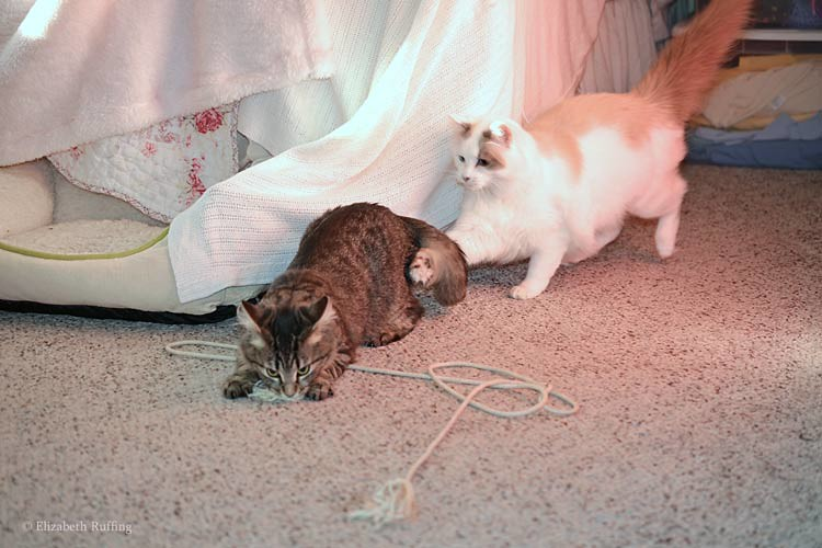 Tabby kittens at play, Josephine chasing Bertie, photo by Elizabeth Ruffing