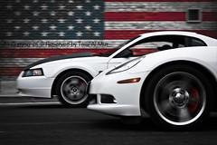 American Racing (Talal Al-Mtn) Tags: blue ford cobra rig kuwait gt fordmustang طلال talal kuwaitcity supercharged mustanggt q8 fordgt dyno gt500 kwt shelbygt500 mustangsaleen mustangcobra mustangshelby shlby موستنق فورد rigshot موستنج lm10 fordmustangshelby almtn شلبي talalalmtn فوردموستنج طلالالمتن المتن shelby2008 mustanginkuwait talalalmtnphotography photographybytalalalmtn mustang2011 موستنججيتي mustangsupercharged shelbyinkuwait talalalmetn mustanggtsupercharged almetn موستنجشلبي quottalal almtnquot shelbysupercharge streetracingkuwait mustangshelby2011 mustangshelby2009 supersnake2010 svtmustangshelby