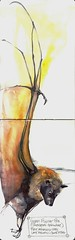 Guam Flying-Fox (Jennifer Kraska) Tags: art moleskine watercolor jennifer bat kraska jenniferkraska guamflyingfox