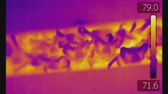 FLIR Crevice and 'Blossom' (RD Wildlife Management | fightwns) Tags: thermal flir tadaridabrasiliensis mexicanfreetailedbat batroost newmexicobats