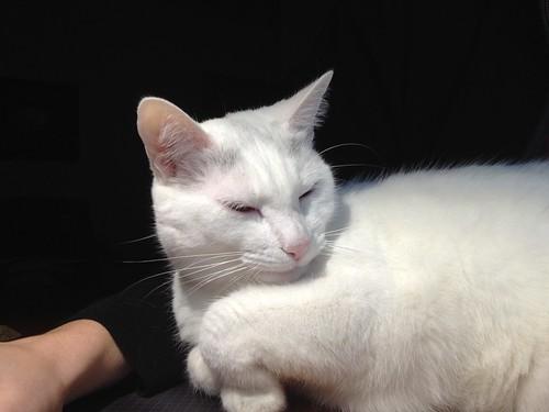 Smug cat is smug
