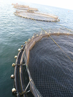 Aquaculture, Malawi. Photo by Jamie Oliver, 2008