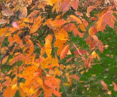 Bright Orange Leaves (Posterized) by randubnick
