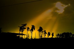 Blessed (guiceccatto) Tags: trees light shadow sun sunlight house luz sol clouds casa sombra palmtrees nuvens nuvem palmeira luzdosol