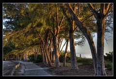 Sunset entre arboles (Javier Huanay) Tags: trees light sunset luz sol nature landscape nikon florida outdoor fl sunrays javier bradenton d7000 huanay bbng