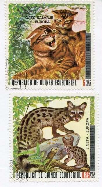guinea cats