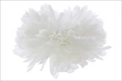 EXPLORED!    White Lotus Petals - hi-key - Reworked - IMG_0758-1000 (Bahman Farzad) Tags: white flower macro yoga petals peace lotus relaxing peaceful meditation therapy hikey lotusflower lotuspetal lotuspetals lotusflowerpetals lotusflowerpetal
