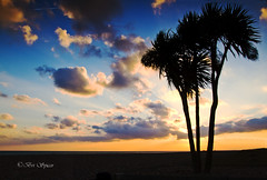 Natures beauty (Through Bri`s Lens) Tags: sky sun sussex worthing palmtree sigma1770f28 canon7d