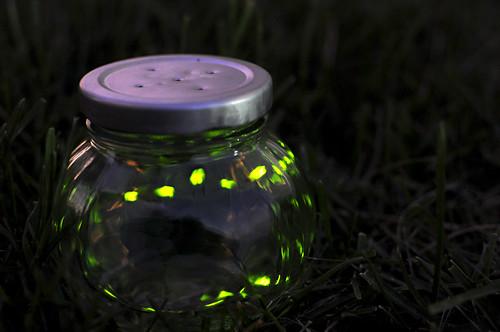 Day 181 - Fireflies by Tim Bungert