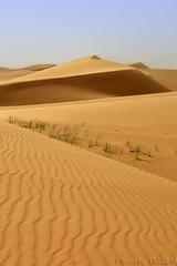 Blowing sand (TARIQ-M) Tags: texture landscape sand waves desert dunes riyadh saudiarabia   canonefs1855 blowingsand       canon400d