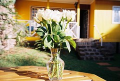 Home (saviorjosh) Tags: africa flowers roses white house film garden table fuji kenya nairobi parasol fujifilm naturaclassica fujiproplusii