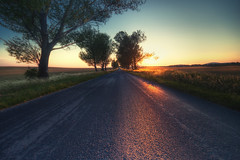 Distance (TheFella) Tags: road county trees sunset sky tree slr field grass digital photoshop canon landscape eos golden photo high europe hungary dynamic budapest perspective row photograph hour processing dslr range hdr highdynamicrange veszprm magyarorszg postprocessing 500d photomatix transdanubia republicofhungary megye veszprmcounty