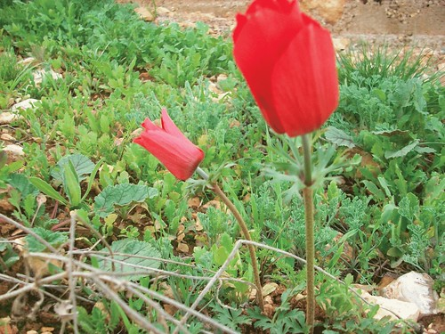 الاردن في الربيع صور 5909540093_2302633c6a.jpg